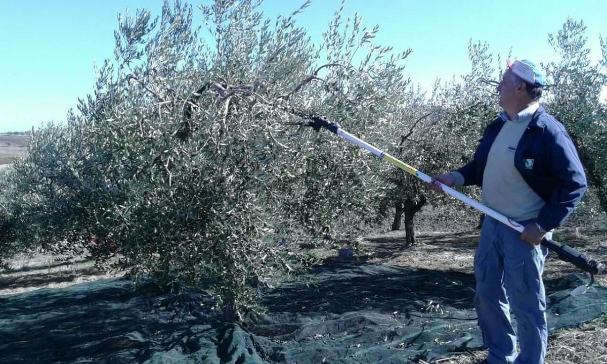 Dalla vendemmia alla raccolta delle olive i prodotti delle for Raccolta olive periodo